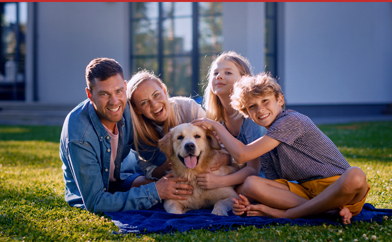 pet safety tips from regroup